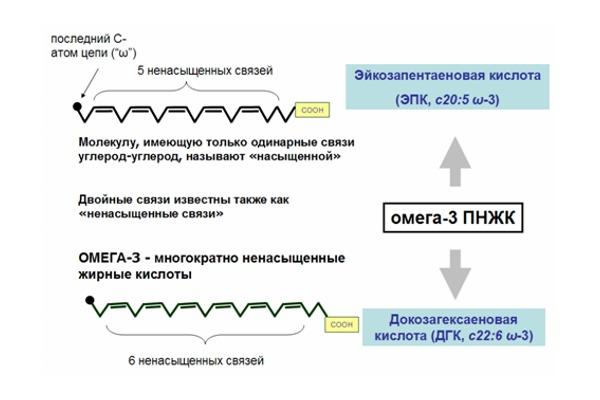 Эйкозапентаеновая и докозагексаеновая кислота