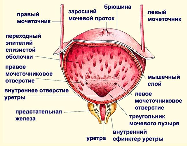 Цистит у мужчин  симптомы и лечение лекарства для лечения цистита у мужчин признаки