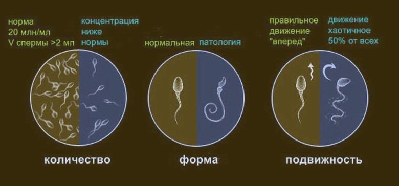 Норма и отклонения в семенной жидкости