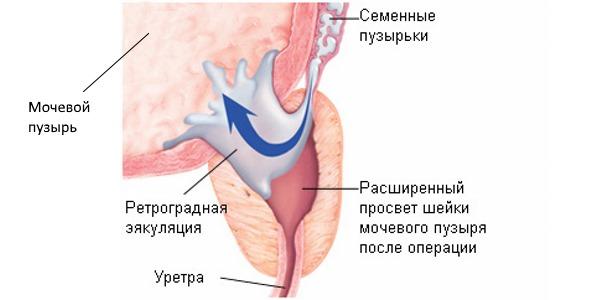Эякуляция ее физиология при сексе