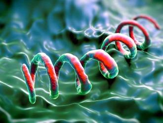 Инфекционные заболевания могут вызвать агрегацию сперматозоидов