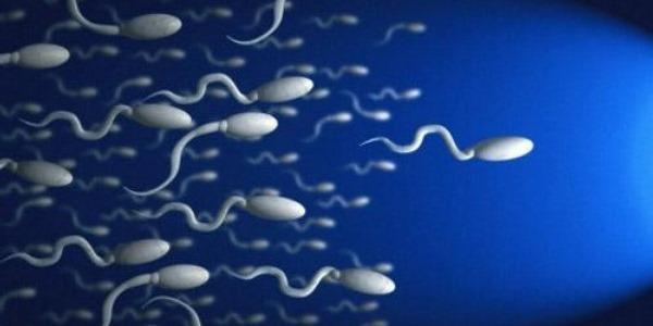 В одном мл спермы находится 65-115 млн. сперматозоидов