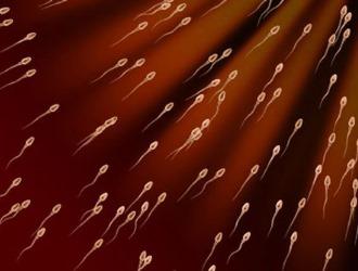 От чего зависит качество спермы?