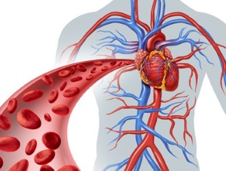 Секс активизирует кровообращение в органах таза