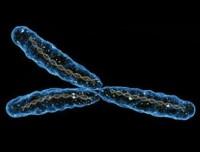 Исчезновение сильный половины: нужна ли человечеству Y-хромосома?